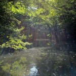 国立科学博物館附属自然教育園は東京都港区のパワースポット
